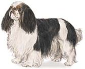 English Toy Spaniels - Toy Dog Breeds